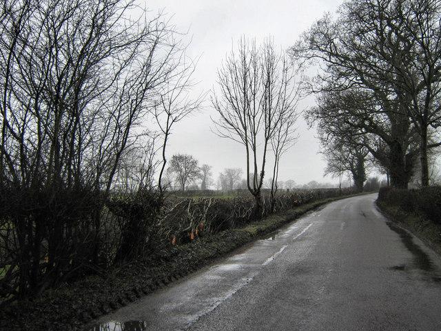 Newly laid hedge on Ash Lane