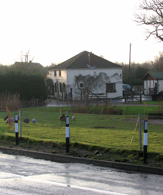 Poultry in meadow beside Acle Road
