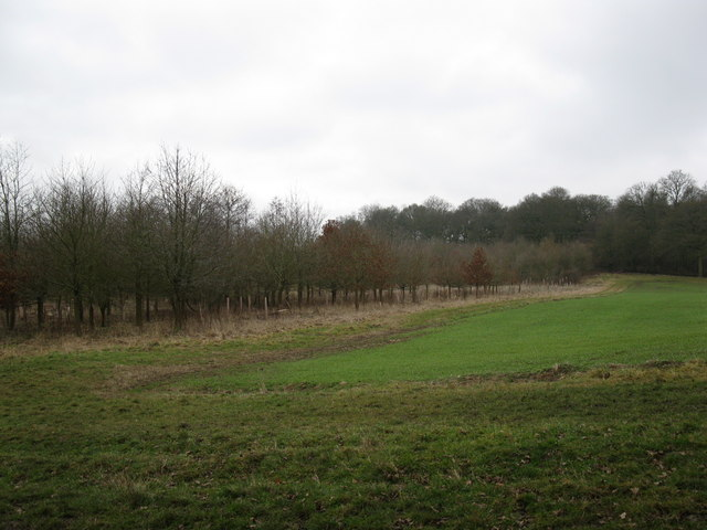 New woods between Edgerton's Wood and Morgaston Wood