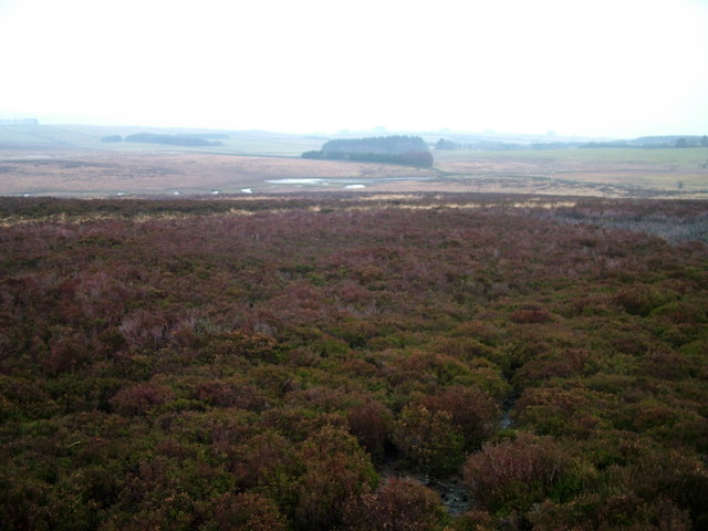 Tarn Moor and Tarn Sike