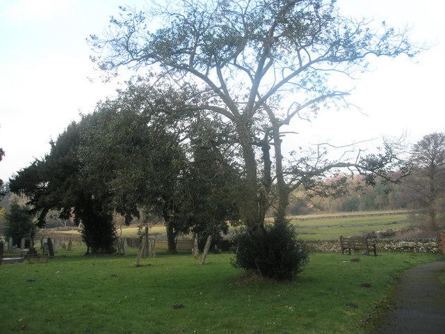 Looking northwards from St Mary's Churchyard, Frensham