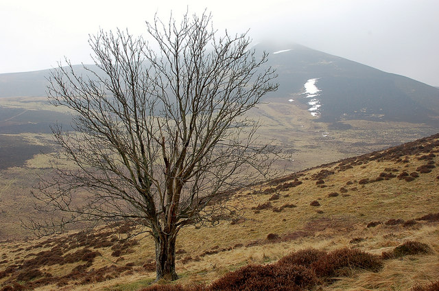 Solitary tree on Riding Hill