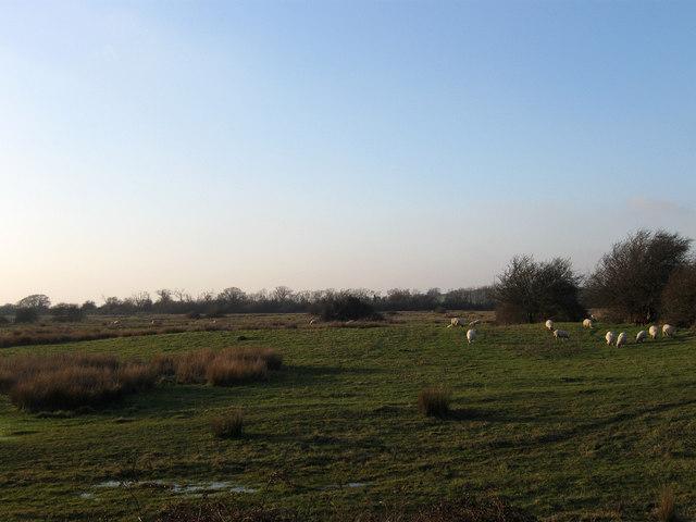 Remains of Saltworks, Hooe Level