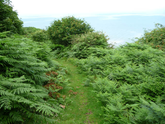 Footpath through bracken at the top of Burgundy Chapel Combe