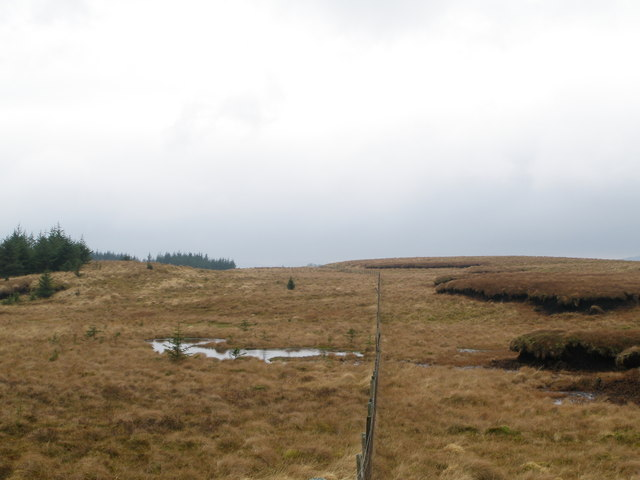 Fence line between the moor and the forest