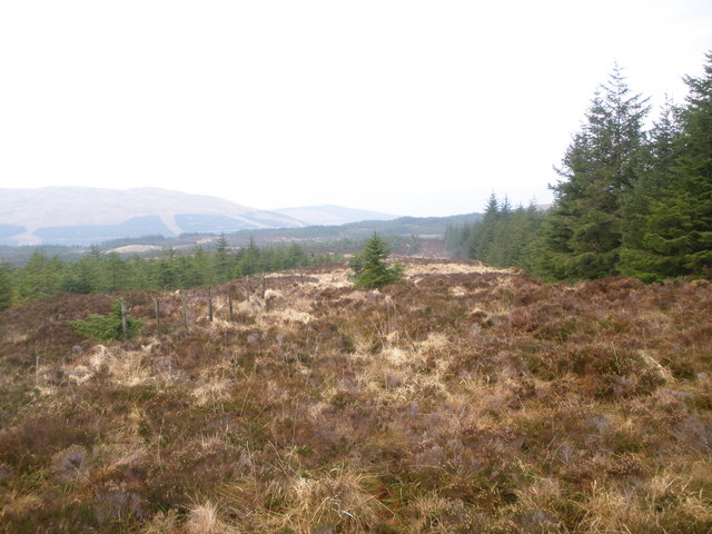 Fence line and firebreak in the forest
