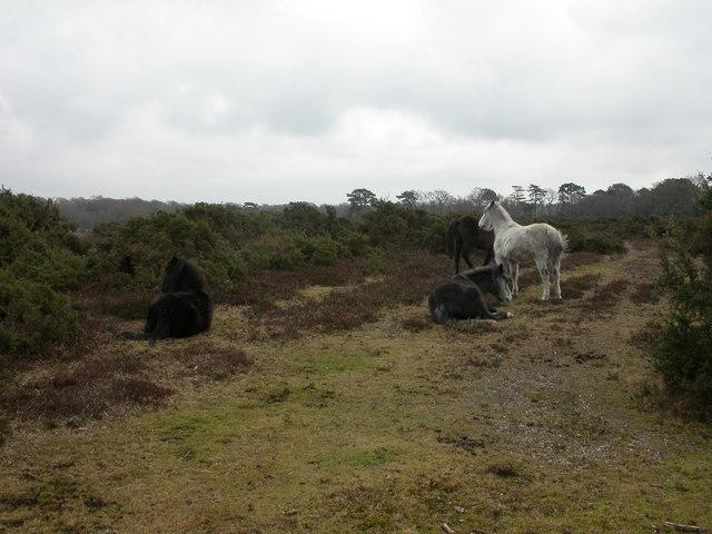 Durnstown, ponies
