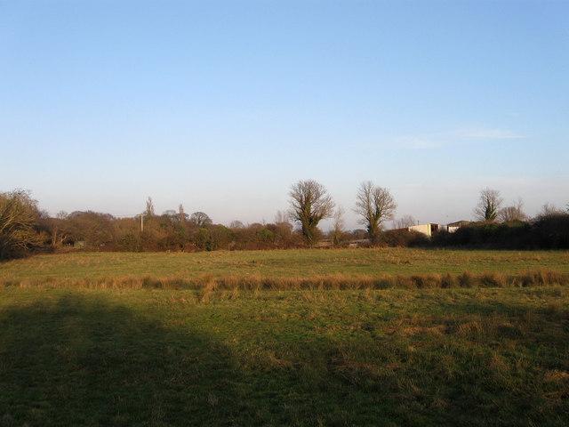 Field next to Willow Tree Farm