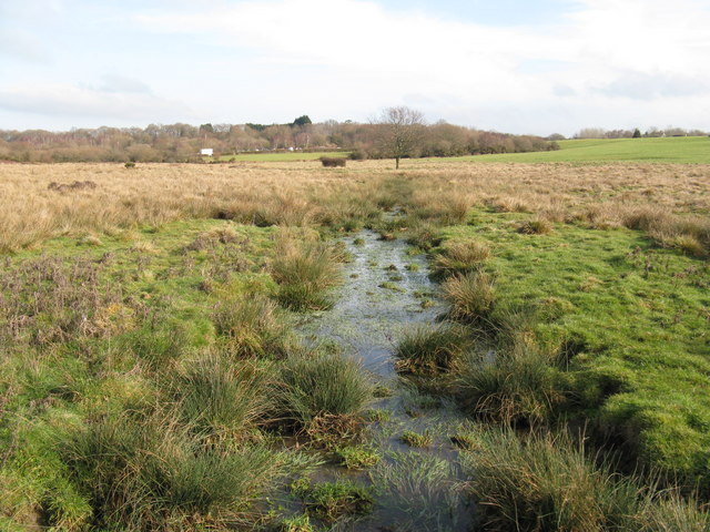 Feeder stream flowing towards the Fish Pond on Ditchling Common