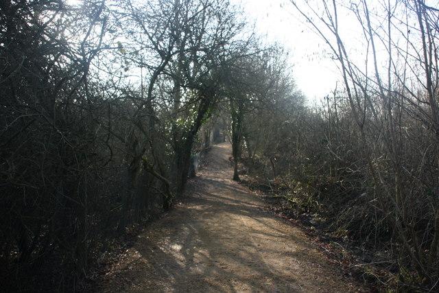 Footpath in Botley Wood