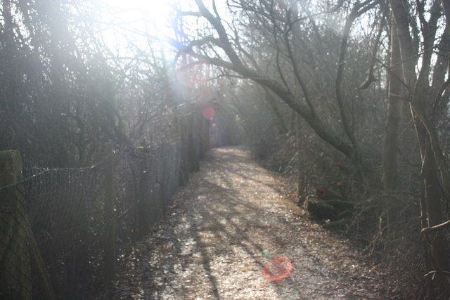 Footpath in Botley Wood