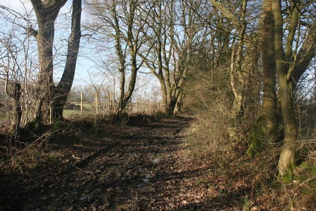 Muddy bridleway to Busses Farm
