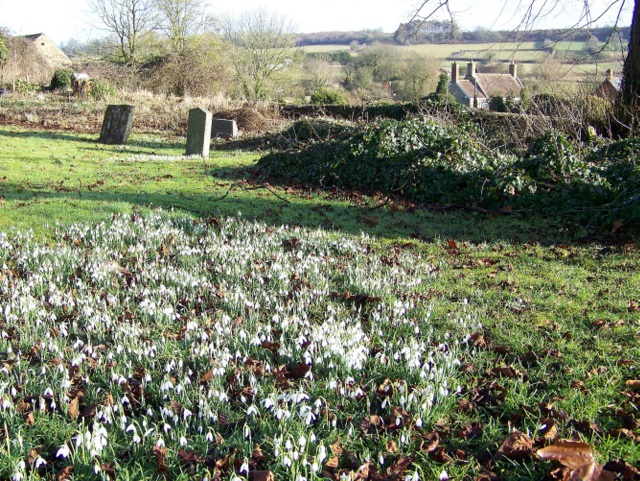 Snowdrops, Churchyard of St Peter and St Paul