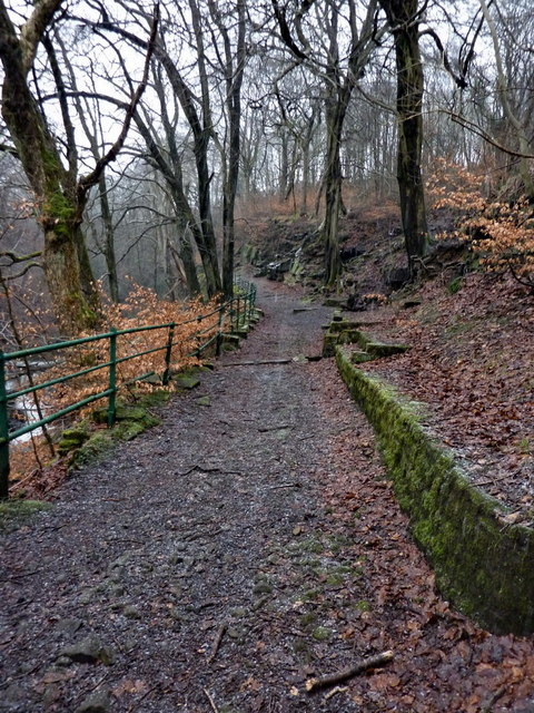 Footpath in Healey Dell