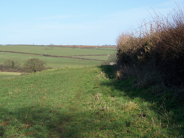Hedge and footpath near Sandford Orcas