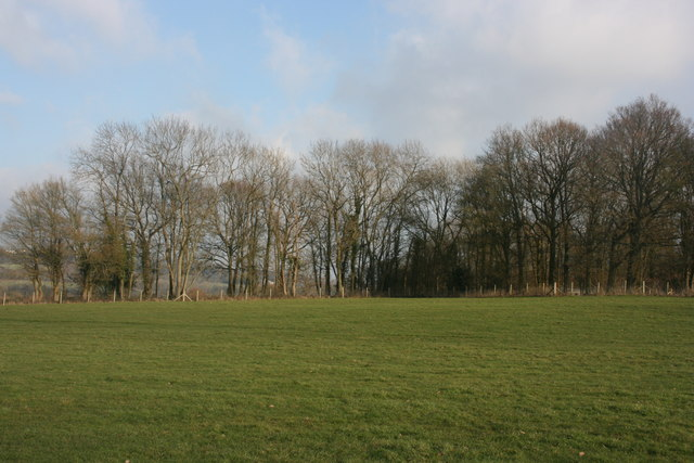 Looking east to Botley Wood from near Busses Farm
