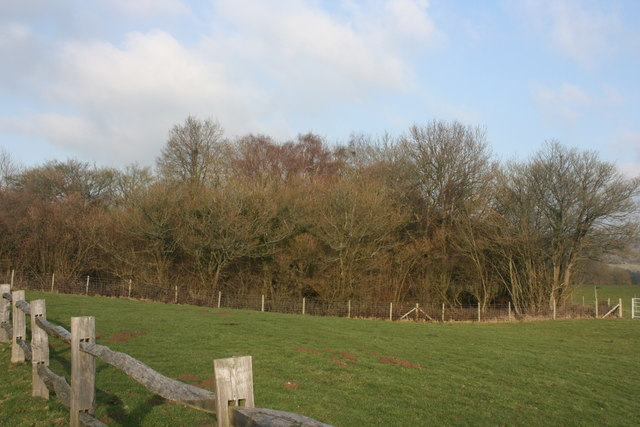 Woodland north of Busses Farm