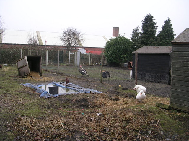 Allotments - off Hard Ings Road