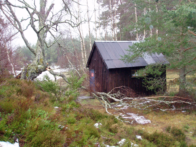 Drake's Bothy, Inshriach Forest