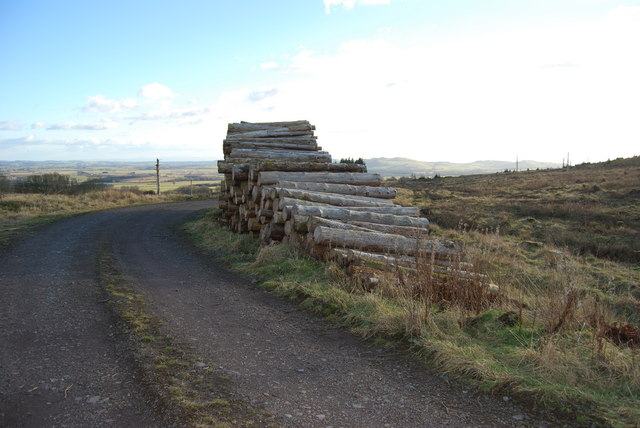 Forestry logpile and view over Annandale
