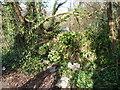 SZ0896 : Bournemouth : Wimborne Road Bushes by Lewis Clarke