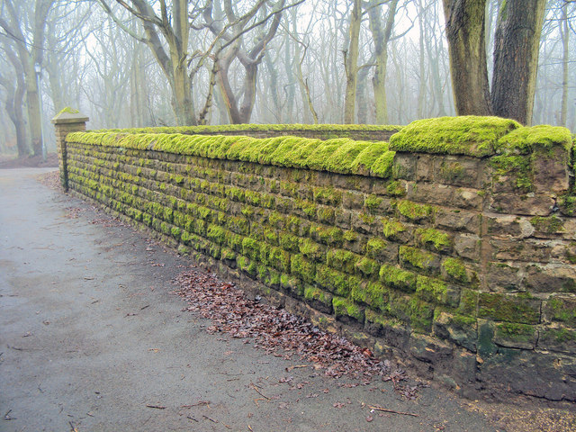 Moss covered wall near Annesley church
