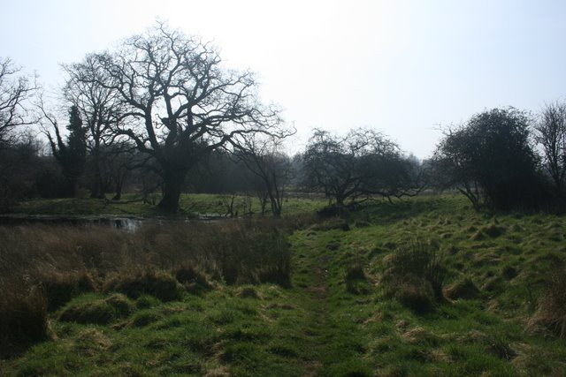Rough grassland, Thompson Common