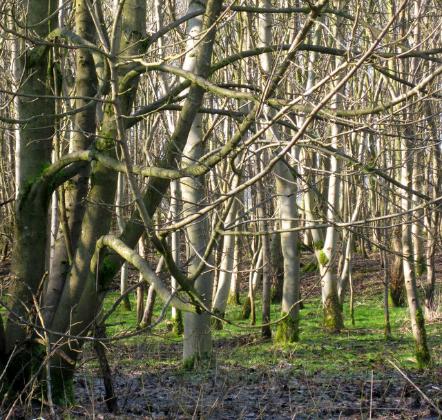 Bain Wood