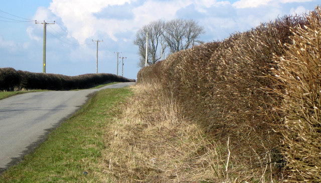 Road and hedgerow