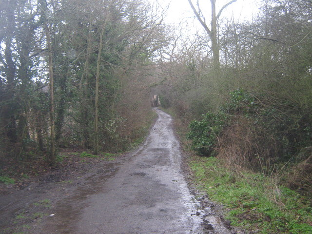 Byway to Bourne Wood