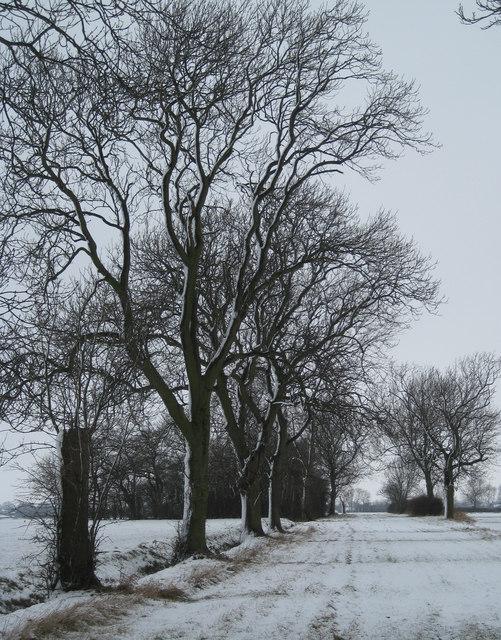 White green lane