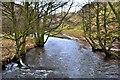 SK1451 : River Dove by Paul Buckingham