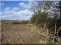 SX3380 : Field at Trewarlett by Derek Harper