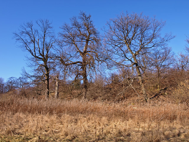 Trees boden boo plantation wfmillar geograph britain for Boden great britain