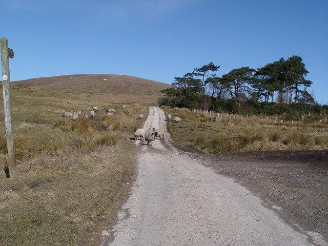 Track To Burnslack