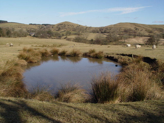 Pond Near Dinkling Green