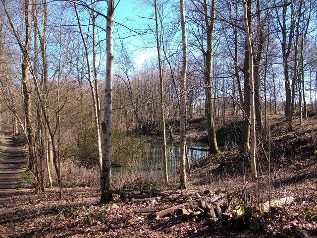 Pond in Belt Plantation Burlingham Woods