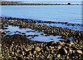 J4892 : The shore at Whitehead by Albert Bridge