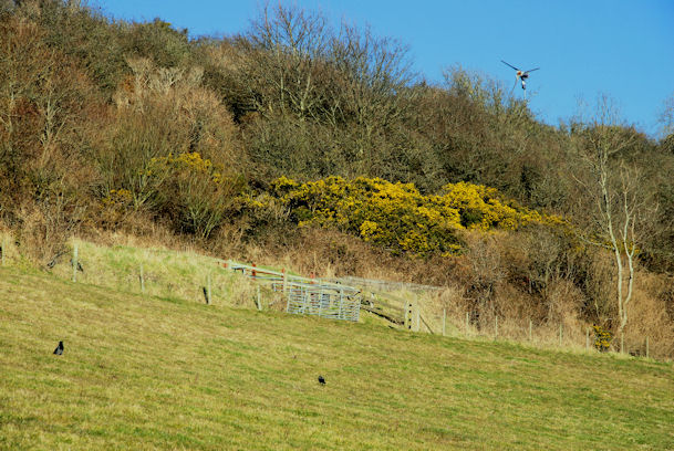 Coastal field, Whitehead (2)