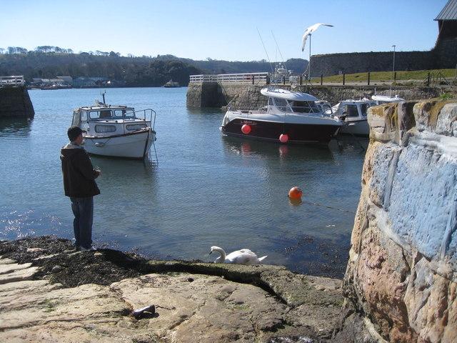 Mutton Cove - local harbour