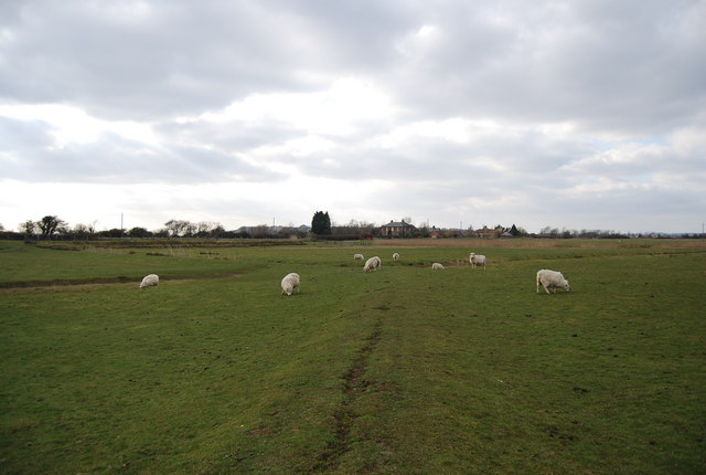 Sheep on the footpath near Thomas-A-Becket church