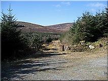 S8550 : Forest Entrance by kevin higgins