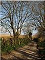 SX0657 : Lane at Trethevey by Derek Harper