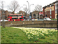 The spring daffodils in the middle of the large roundabout (accessed by subways) bring a bit of cheer to an otherwise gritty urban scene of concrete walls, housing blocks and buses.  See also [[1766285]].