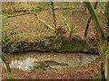 SX4861 : Stream through Porsham Wood by Derek Harper