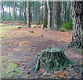 SY9192 : Wareham Forest floor by Jonathan Billinger