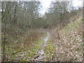 SJ6273 : Cutting on Disused Railway Line by Dr Duncan Pepper