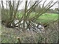 SJ6074 : Pond adjacent to roadside by Dr Duncan Pepper