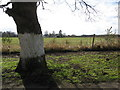 SJ6170 : Edge of farmland by Dr Duncan Pepper