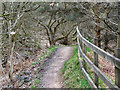 SD7704 : Kingfisher Trail, Clifton Country Park by David Dixon